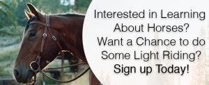 REALM Horse Program Banner