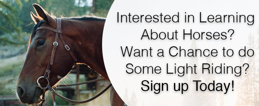 REALM Horse Program